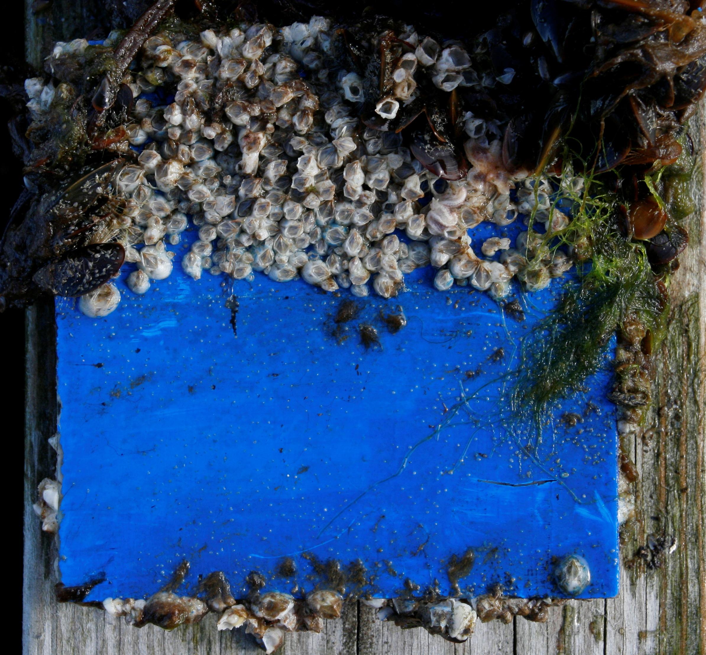 Blue panel 2009